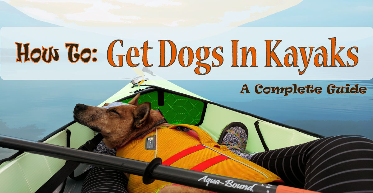 Read more about the article How To Get Dog In Kayaks