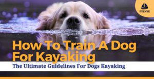 How to train a dog for kayaking; dogs kayaking; kayaking with a dog; dogs traning for kayaking