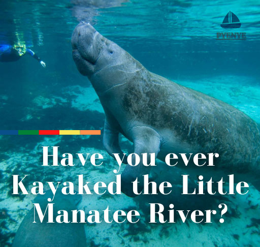 Little Manatee River Kayaking, Rivers In The United States; River Kayaking; kayaking in the rivers, kayak in the little Manatee, Little Manatee River