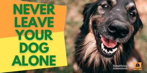 Dogs kayaking, kayaking with your dog, train dogs for kayaking, how to train your dog for kayaking, dogs kayaking training