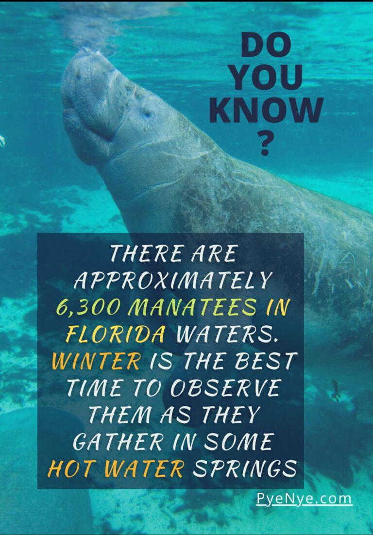 Kayaking with manatee