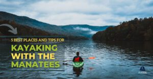 The 5 Best Places And Tips For Kayaking With Manatees