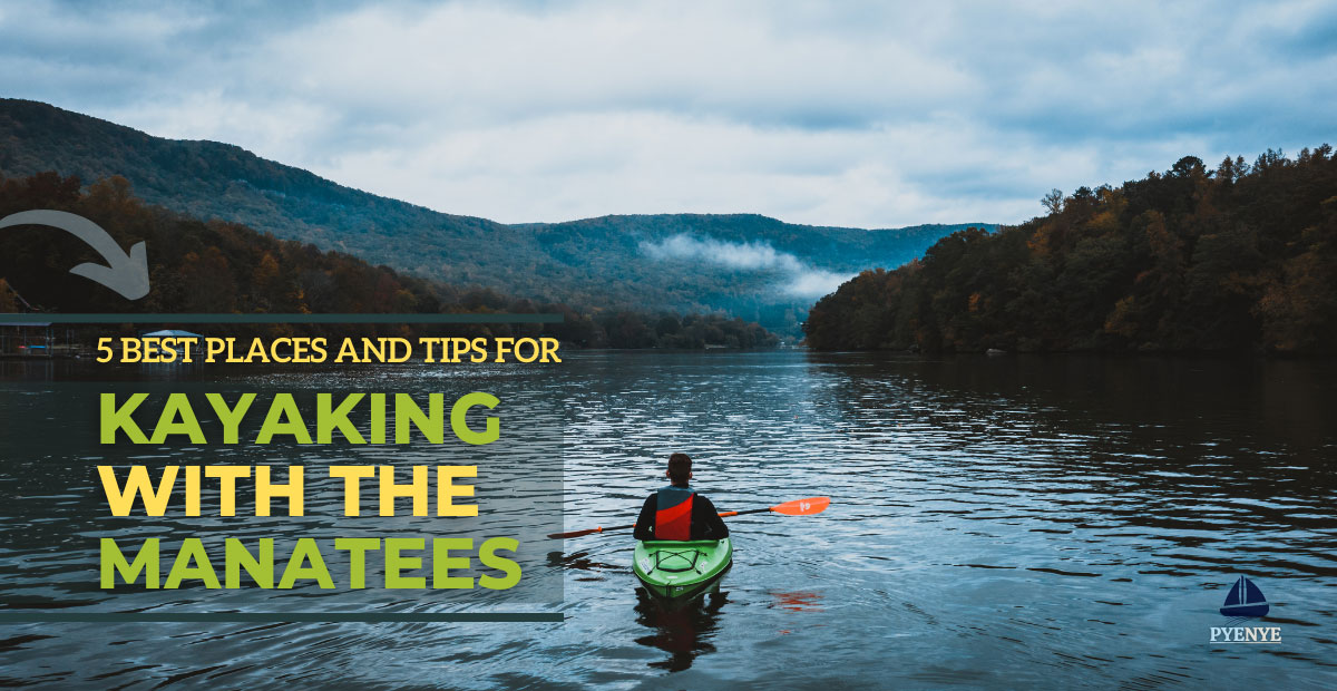Read more about the article The 5 Best Places And Tips For Kayaking With Manatees